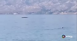 A whale emerged in the Velebit Channel only 200 meters away from swimmers