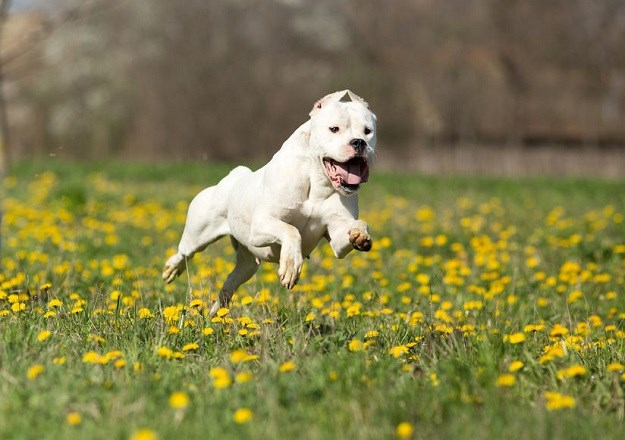 https://ip.index.hr/remote/indexnew.s3.index.hr/images2/dogoargentino123.jpg