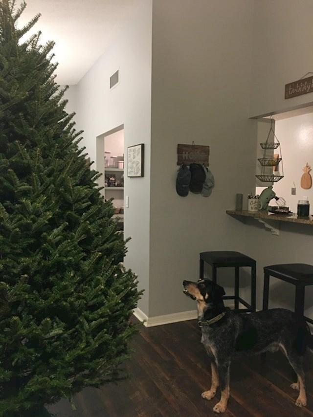 Prvi Božić da je s nama i nije mu jasno zašto se šuma preselila u kuću. Već pola sata bulji u jelku, a kad smo uključili cvrkut ptica na Youtube-u, situacija je eskalirala