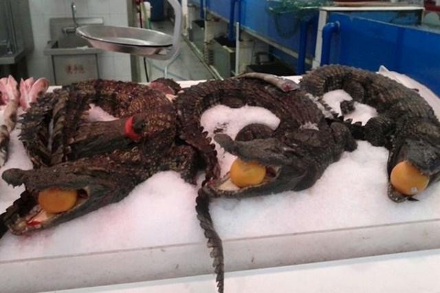 U dućanima možete kupiti cijelog krokodila ili morskog psa