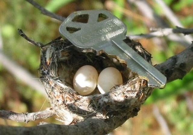 Jaja kolibrića u usporedbi s ključem