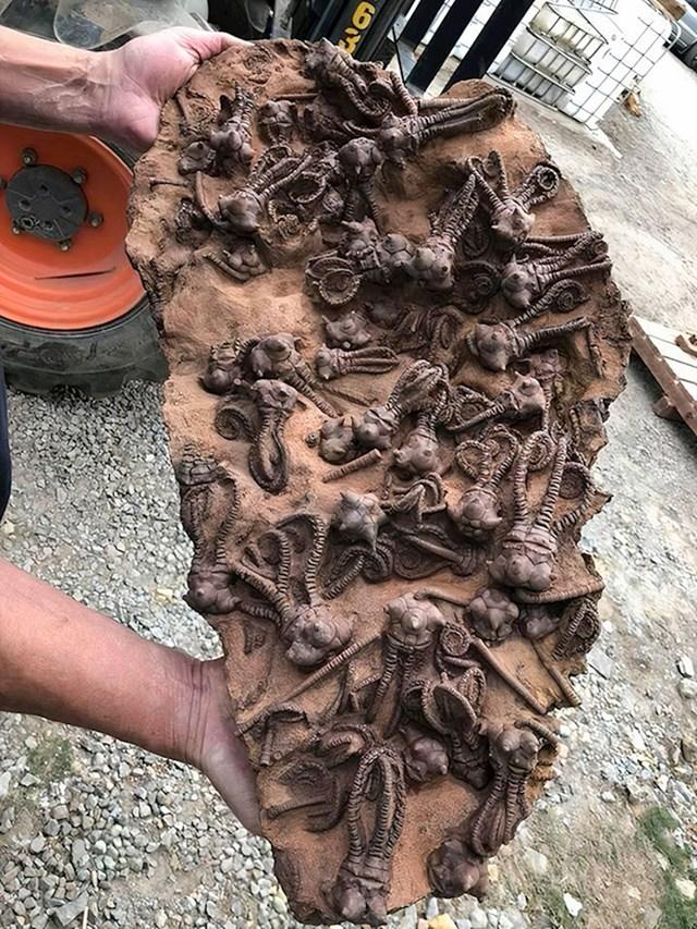 Fosili krinoida