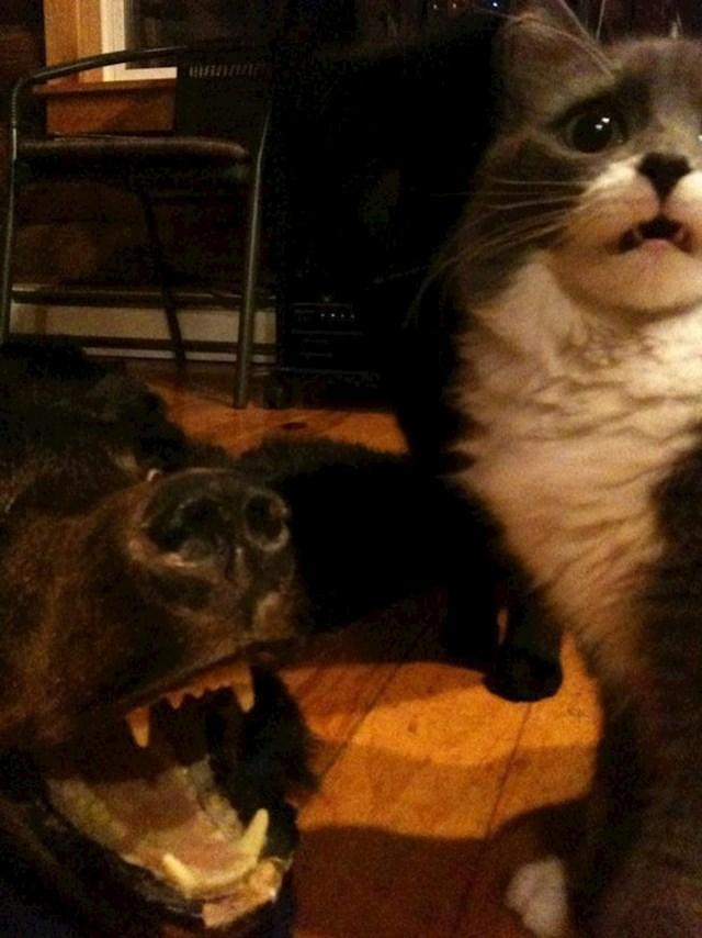 19. Tip je donio glavu medvjeda, ovo je reakcija njegove mačke