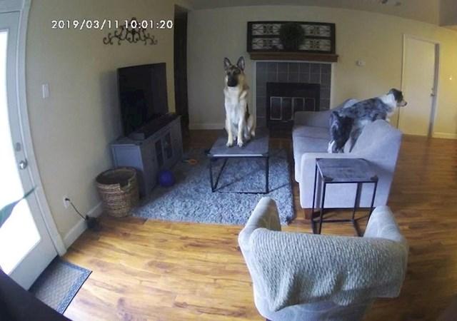 Gledam snimku što mi psi rade dok sam na poslu i ništa mi nije jasno 🤣