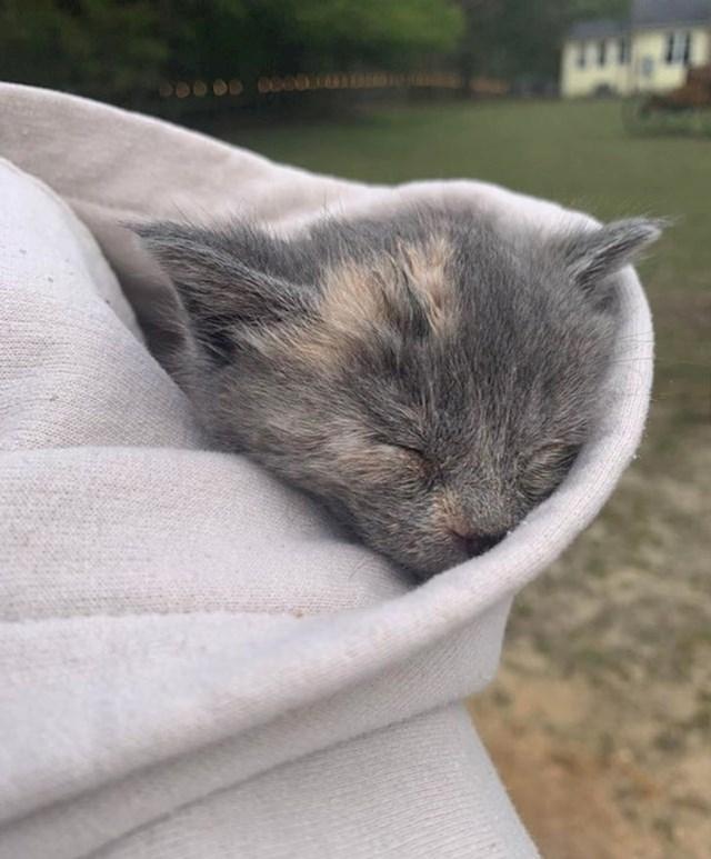 """""""Kad smo ušli u azil, ovaj mačić je u roku minutu zaspao ovako. U drugoj minuti već smo potpisivali papire za udomljavanje"""""""