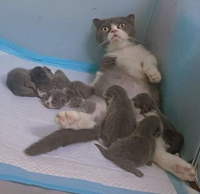 Rekli su da je majčinstvo uživancija