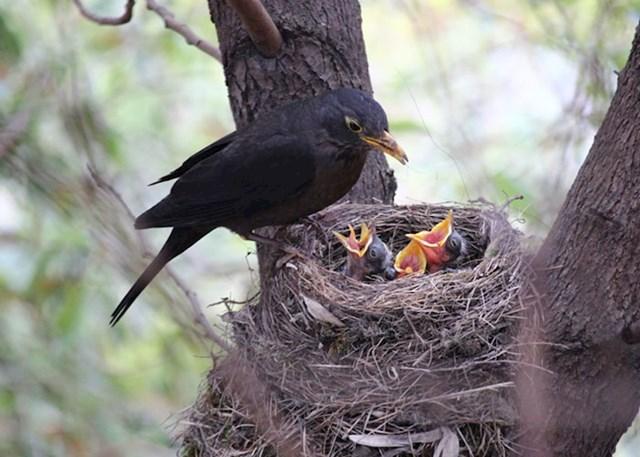 """""""Mislio sam da je pticama gnijezdo isto što je nama kuća ili stan. Da imaju jedno gnijezdo u kojem žive cijeli život, a ne da im zapravo služi samo za položiti jajašca i othraniti mladunčad. Šokiralo me kada sam saznao u 72. godini života"""""""