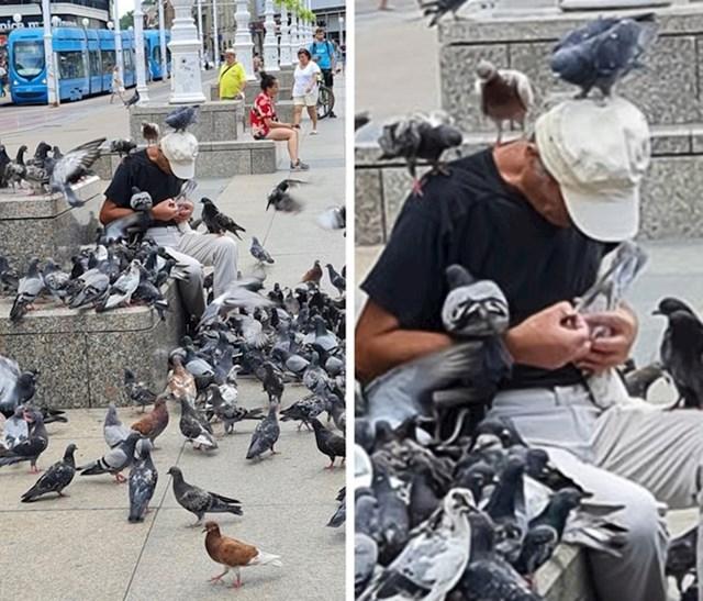 Starac se pobrinuo za ranjenog goluba
