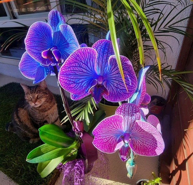 Zapanjujuće boje cvijeta orhideje