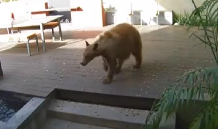 VIDEO Medvjed im ušao u kuću, ali nije računao na ovakve čuvare; morate vidjeti tko ga je potjerao