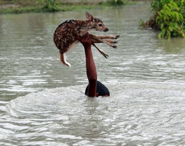 Dječak riskira svoj život da bi spasio lane od poplava u Bangladešu