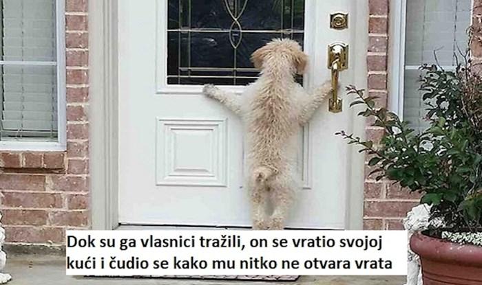19 puta kada su se nestali psi vratili svojim vlasnicima; ovo je tako dirljivo!