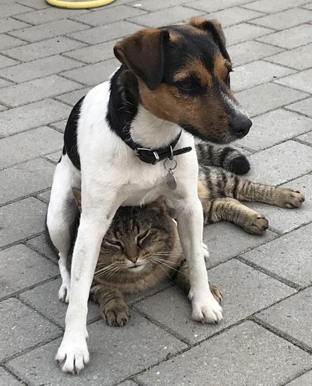 """""""Od cijelog dvorišta, ona uvijek sjedne na našeg mačka!"""""""