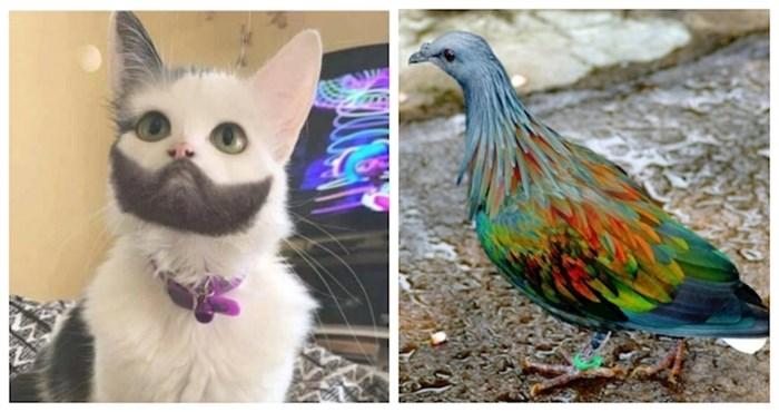 17 fotki životinja koje su osvojile jackpot u naslijeđenim genima; nešto predivno!