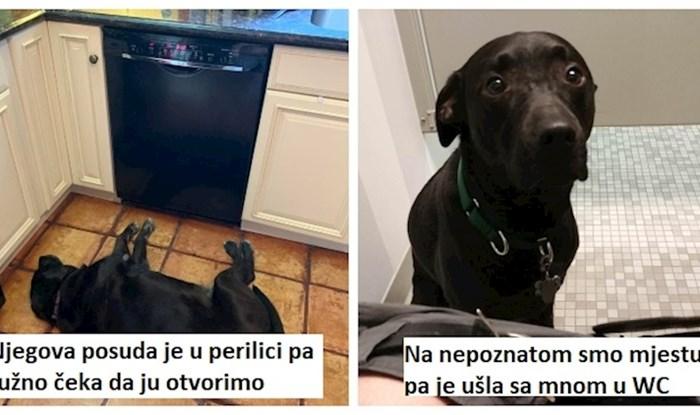 11 pasa čija gluma zaslužuje Oskara; vlasnici ljubimaca će se odmah pronaći u ovim prizorima