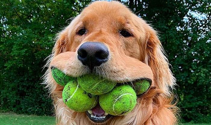VIDEO Ovi ulični psi nisu ni sanjali da će postati zvijezde velikog sportskog natjecanja