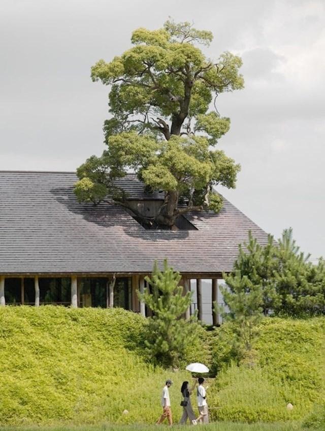 Još jedno stablo sačuvano za buduće generacije!