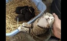 17 fotki životinja zbog kojih će vam postati toplo oko srca; najdirljivije što ćete danas vidjeti