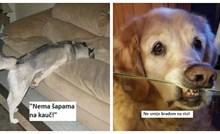 """20plus fotki kada su snalažljivi psi našli """"rupu u zakonu""""; vlasnici nisu imali šanse protiv njih"""