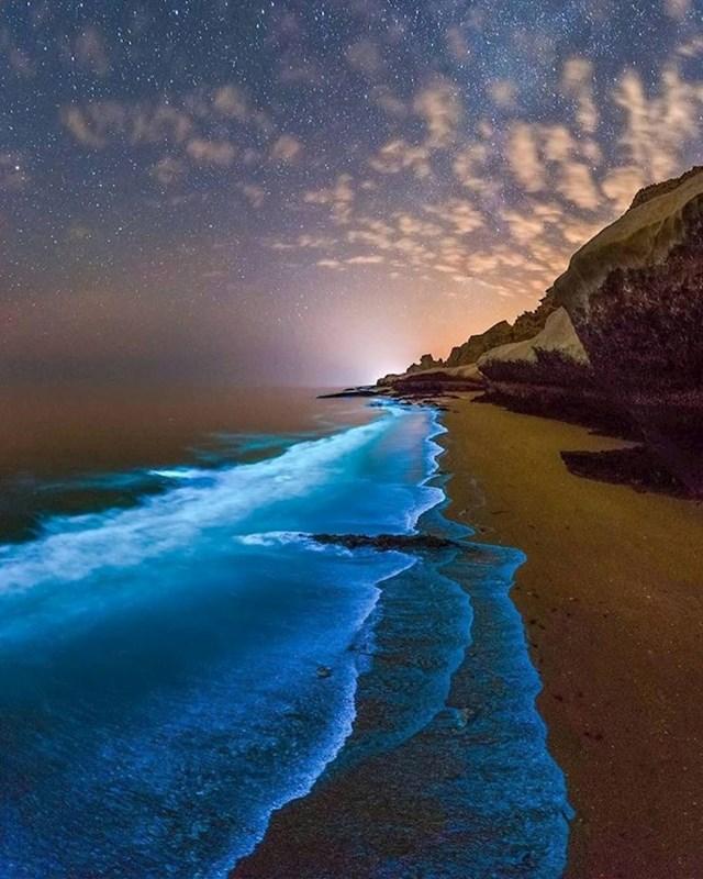 Bioluminiscentni fitoplankton