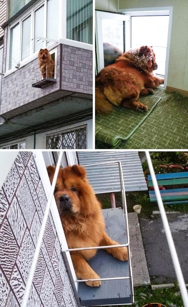 I pas želi vidjeti što se događa na ulici