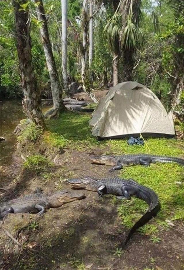 """""""Jedno sasvim obično kampiranje na Floridi"""""""