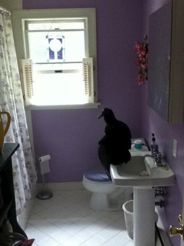 """""""Nisam baš očekivao da sup koristi zahod, ali tko mi je kriv kad ne kucam prije ulaska"""""""