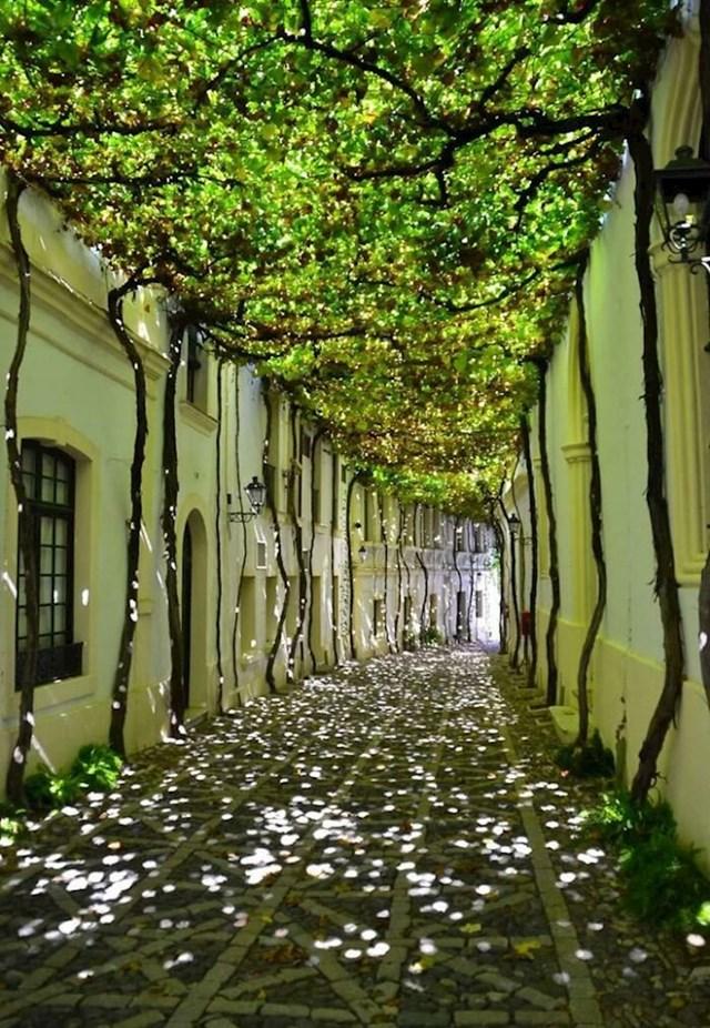 6. Prirodni hlad u jednoj ulici u Španjolskoj