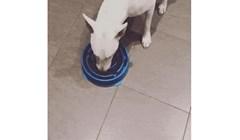Kupili su mu neobičnu posudu za hranu kako bi sporije jeo, a pas ih je nasamario na urnebesan način