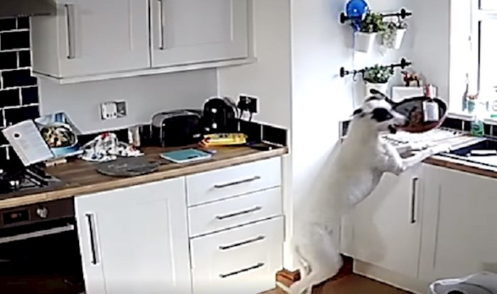 Smiješne situacije koje su mogle zabilježiti samo nadzorne kamere
