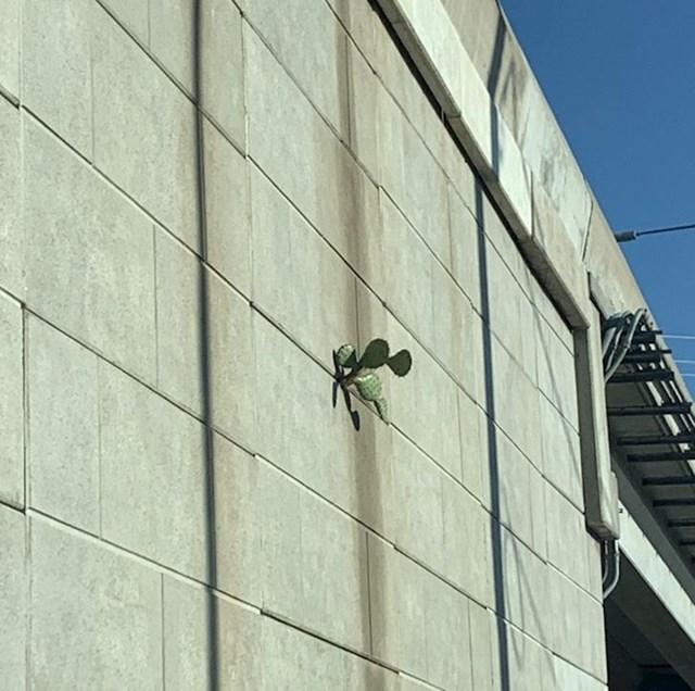 Kaktus koji prkosi svim zakonima svemira