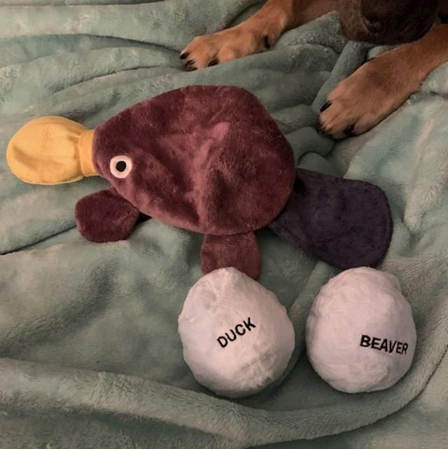 Pas je od jedne napravio tri plišane igračke