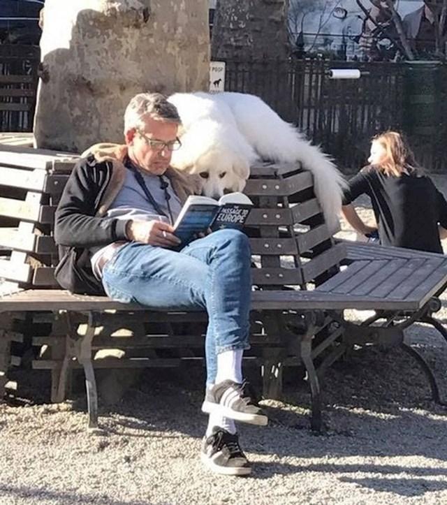 Dok se ostali psi igraju, moj čita knjigu sa mnom iako smo u parku