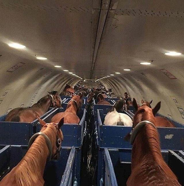 Konji u avionu