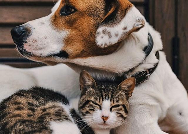 """""""Kao dijete sam mislila da su sve mace ženke, a svi psi mužjaci"""""""