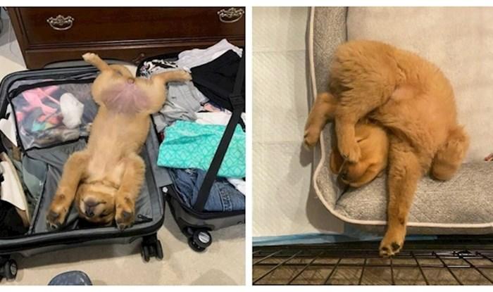20 puta kada su psi zaspali na neobičnim mjestima i u pozama od kojih nas bole leđa samo od gledanja