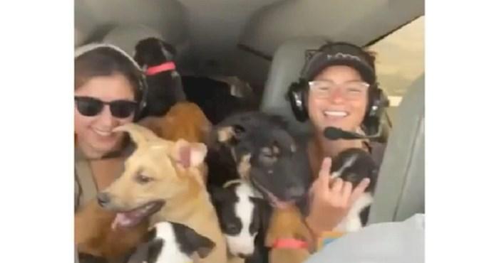 Snimka s jednog leta obara rekorde gledanosti; pogledajte zašto je ovaj avion pun pasa!