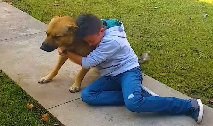 VIDEO Ovo je nešto najdirljivije što ćete danas vidjeti; kada pse vrate njihovim obiteljima