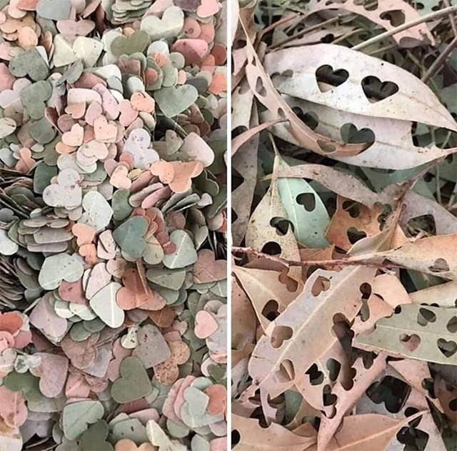 Konfeti od suhoh lišća