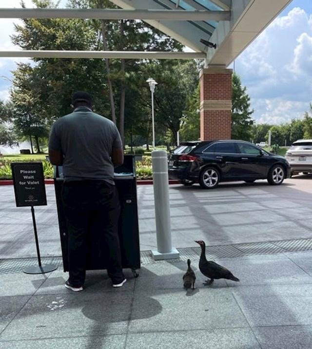 Patkice dolaze na ručak, kojeg im ovaj gospodin donosi svaki dan kada dođe na posao