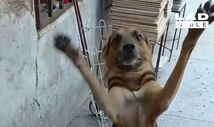 VIDEO Ovim psima će srce iskočiti od sreće zbog povratka vlasnika; ne znamo čime smo ih zaslužili!