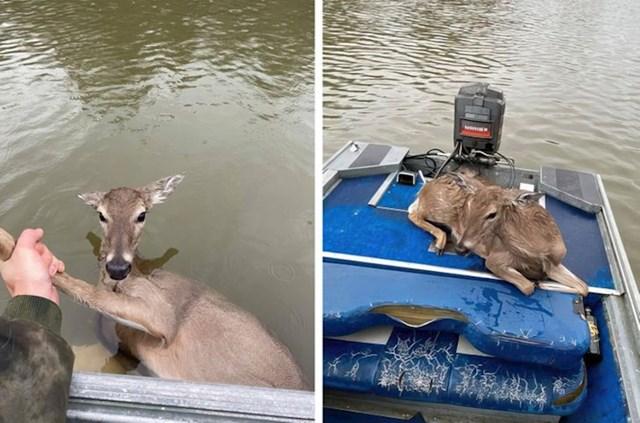 Ribiči su uočili srnu koja se utapa i izvukli je na sigurno
