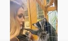 Rakun se raspametio kada mu je atraktivna cura prišla u zoološkom vrtu; ovo je presmiješno!