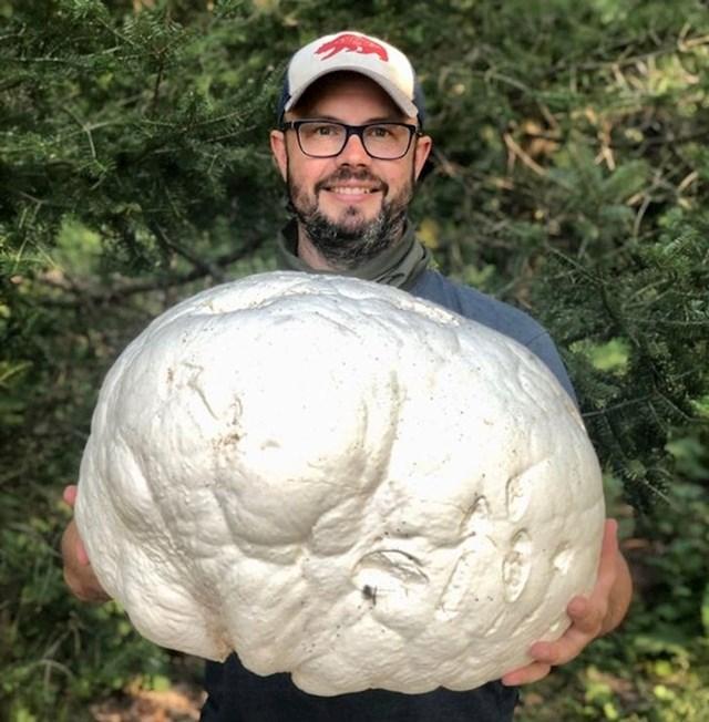 Od ove gljive bi se najeo jedan manji pir!
