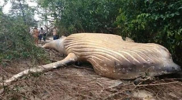 """""""Truplo kita u amazonskoj prašumi. Gdje ide ovaj svijet?"""""""