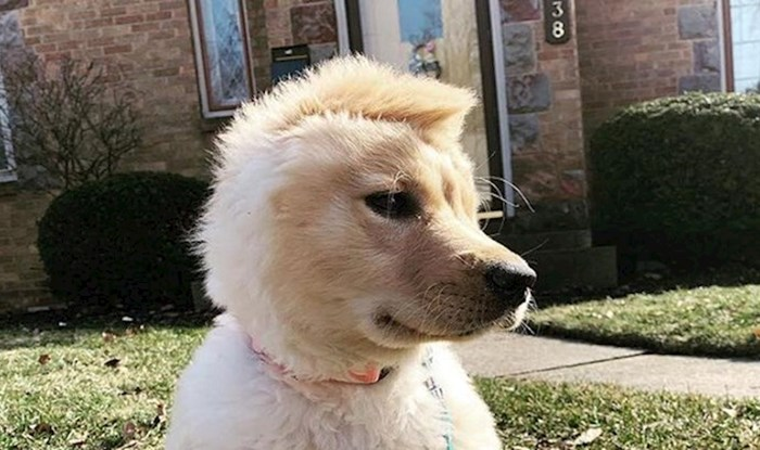 Ovaj preslatki psić zbog jedne je fizičke osobine dobio originalni nadimak i postao senzacija!