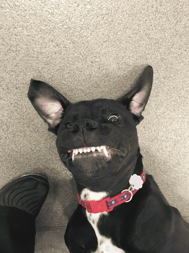 Znaju se smijati za fotke