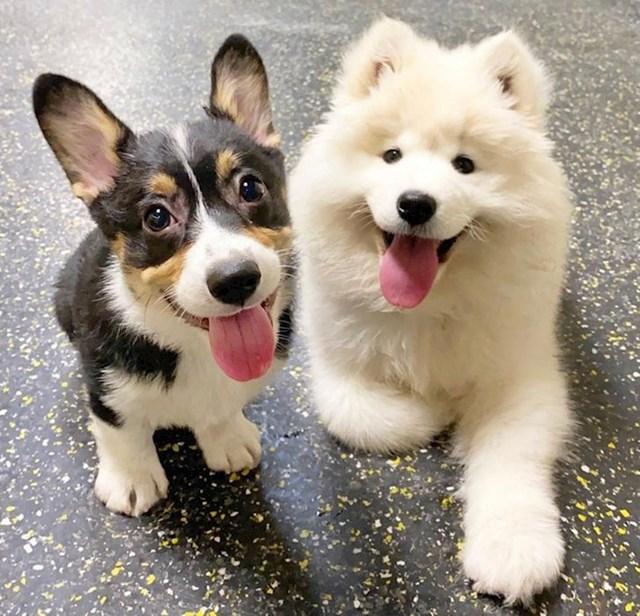 """""""Moj psić prvi dan u psećem vrtiću i već je stekao prvog prijatelja!"""""""