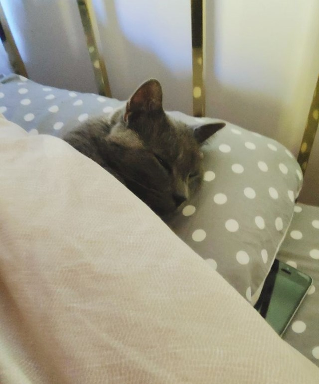 Glava na jastuku i pokrivena do vrata! Ovako legne svako jutro čim se brat ustane i dok je krevet još ugrijan!