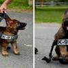 32 fotke štenaca na njihov prvi radni dan u službi